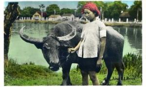 Saigon  271 Sud Viet Nam Environs de Saigon Jeune gardienne de buffle. Escrit al Dorso y firmada en Hanoi 1-3-1951 , color 9 €